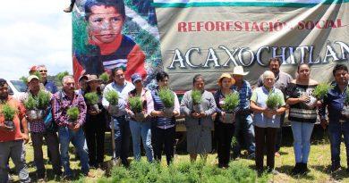 Reforestan bosques de Acaxochitlán afectados por incendios el pasado mes de mayo