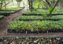 Dispone la SEMARNATH de 24 especies de árboles para programas de reforestación