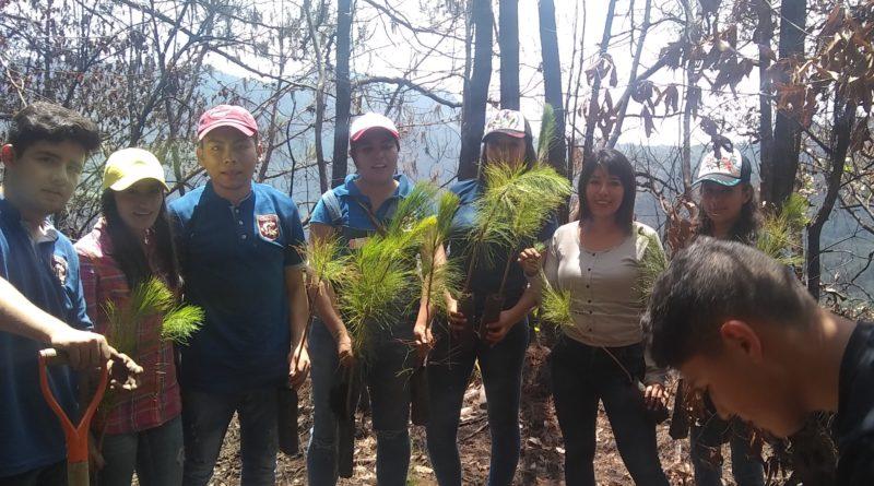 Estudiantes de Ingeniería Industrial de la UPT reforestan zona en la Otomí-Tepehua